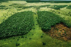 Проект 02 - Да засадим 100 дръвчета